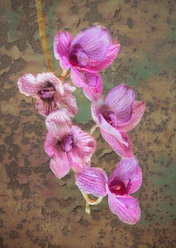 20-C1-2142 Fading Orchid